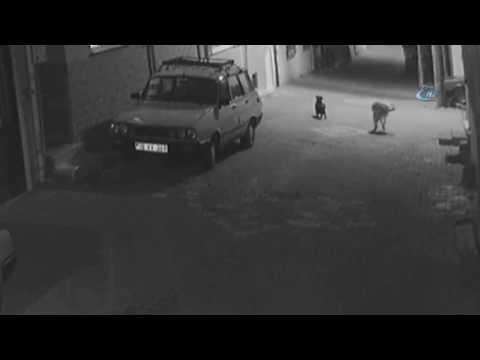 Sokak Köpeğini Silahla Vurdular... O Anlar Kamerada