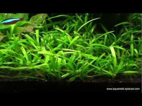 Wandaquarium - 240cm x 40cm x 20cm