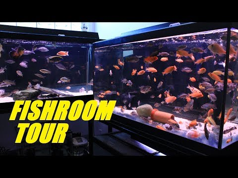 YOUR FRIENDLY NEIGHBORHOOD FISH ROOM TOUR