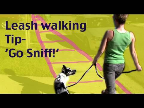 0 Dog Training Tip  Leash Walking: Go Sniff and Marking