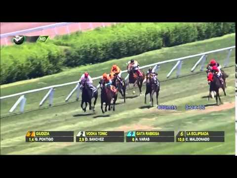 Vidéo de la course PMU PREMIO VIA GIULIA