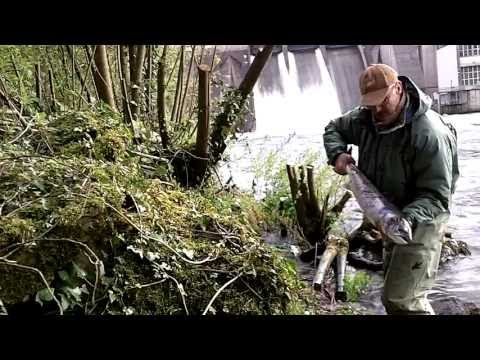 Salmon Fishing Ireland 2013. The Dam Fishery. ( HD ).