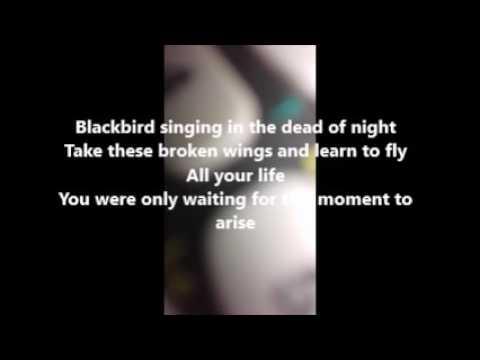 BlackBird  The Beatles Lyrics