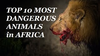 TOP 10 Most Dangerous Animals AFRICA - Kevin Hunter