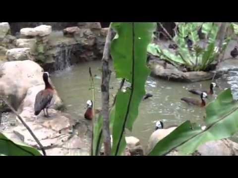 Parrot Farm Malaysia Farm in The City Malaysia