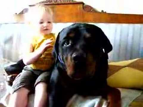 My Rottweiler and my son Edvin attacked...!!.........With kisses :-)