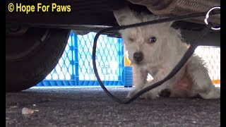 Little homeless dog rescued using a cool trick.  The end will make you SO HAPPY!