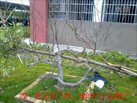 Hurricane Soudelor China Meteorological Administration started Hurricane II level emergency response