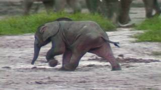 Google Earth Hero_ Save The Elephants