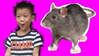 Khánh Huy tìm thấy chuột khổng lồ - Khánh Huy TV