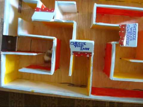 Middle School Science Fair Projects Ideas Science Fair Project Idea