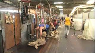 Livestock exports: the live sheep trade