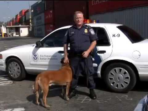 Pulse of the Port: Dogged Pursuit of Contraband