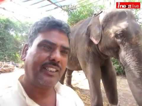 Hathi Mere Sathi: Great Effort To Save Elephants video