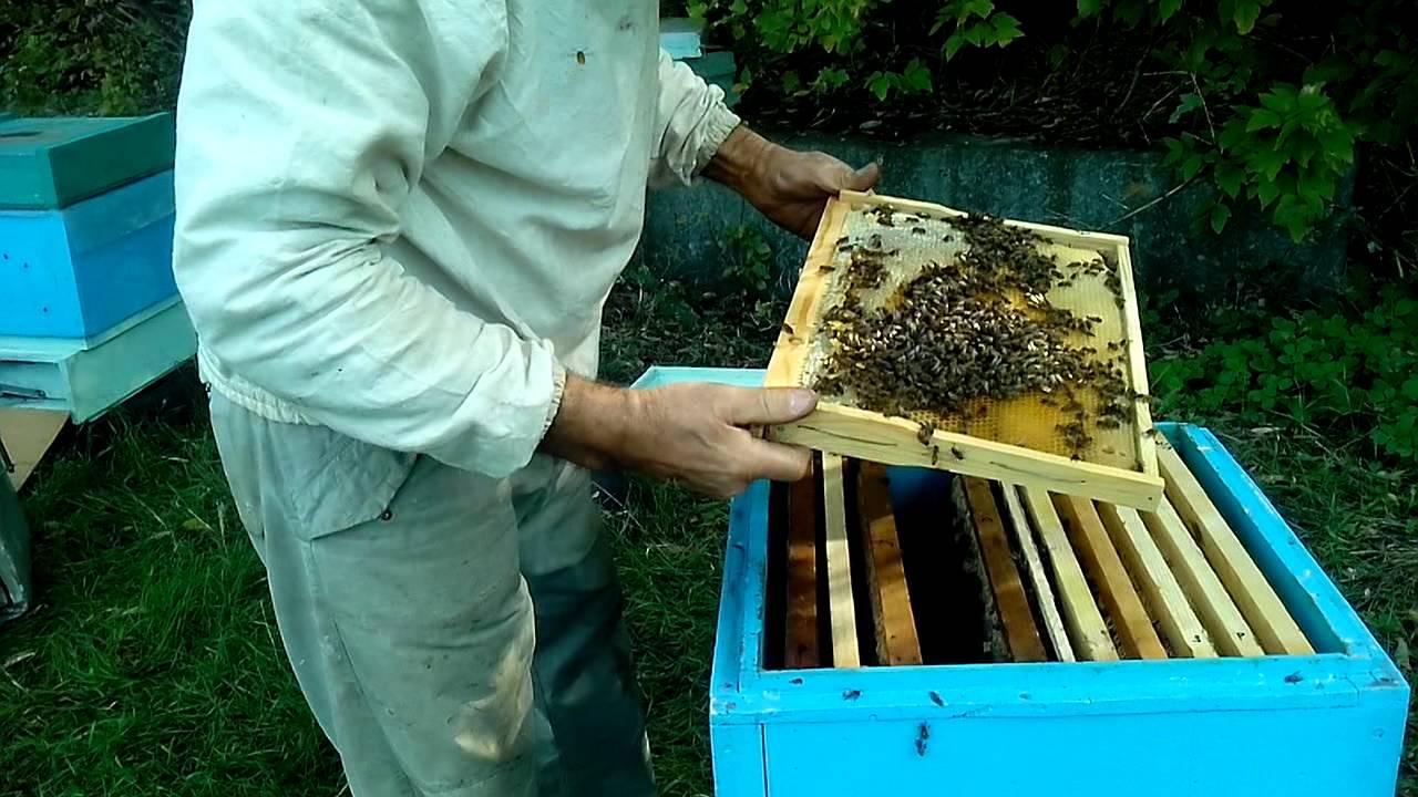 Как в августе сделать отводок пчел 745