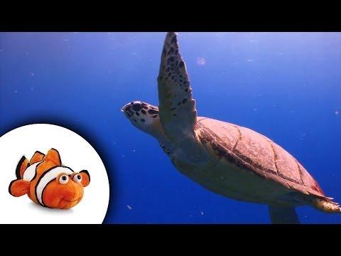 Treasures of a coral reef - seahorse, sea turtle, parrotfish
