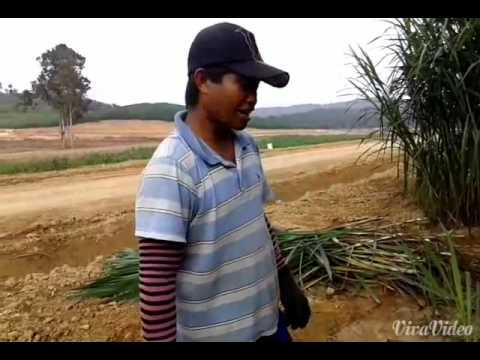 Sex Lombok T.k.i Indonesia video