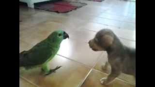 cachorro e papagaio se beijando