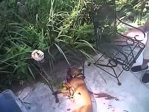 Topeka police body camera video of fatal dog shooting from July 13
