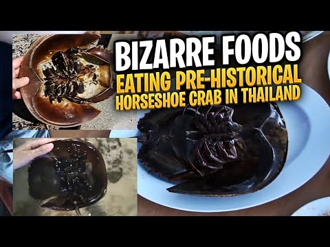 Eating Pre-historical Horseshoe Crab in Thailand
