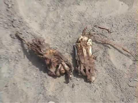 momias incas peru /inca mummies peru