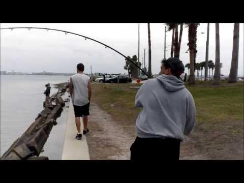 Florida Shark Fishing!