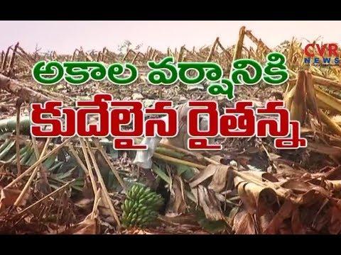 అకాల వర్షంతో అన్ని పంటలు కు తీవ్ర నష్టం |  Andhra Pradesh | CVR News