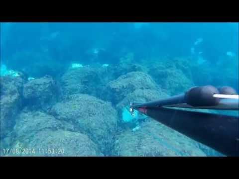 spearfishing Ilha terceira Açores