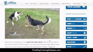 Doggy Dan's online dog trainer review - does the course work?