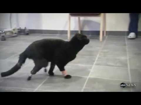 !!THE WORLD S FIRST BIONIC CAT!!