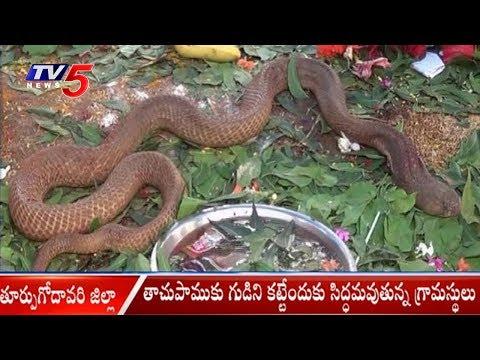తాచుపాముకు గుడిని కట్టేందుకు సిద్ధమవుతున్న గ్రామస్థులు | East Godavari District | TV5 News