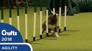 Agility - Kennel Club British Open Final (Jumping) Part 1 | Crufts 2018