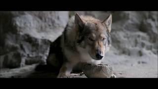 Review Phim Alpha: Người Thủ Lĩnh - Cuộc phiêu lưu của Keda và Alpha