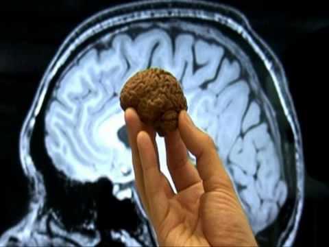 อาหารบำรุงสมองลูก