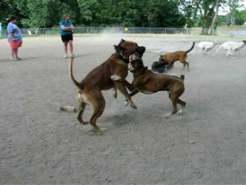 Dog Park Fights Youtube