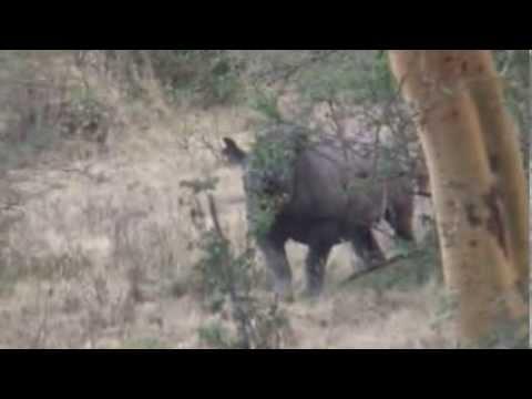 Black Rhino of Lake Nakuru Kenya Safari Day4 with NokJoti 2009