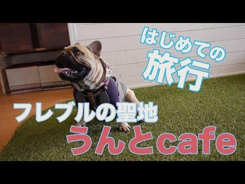 フレブルドッグカフェの聖地「うんとcafe」は最高に幸せな場所だった。
