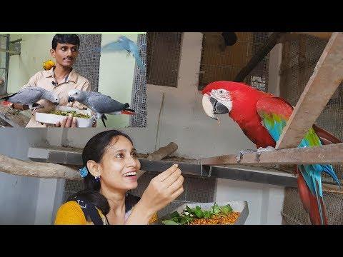 Budgies Parrot Macaw African Grey Parrot Cockatoo Farm Visit /Bird's Foods Seeds & Fruits.