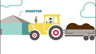 Is Cow Manure Bad for the Environment? How Methane Digesters Work