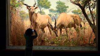 Treasures of New York: American Museum of Natural History