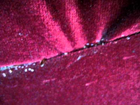 Bed Bugs In Couch Youtube