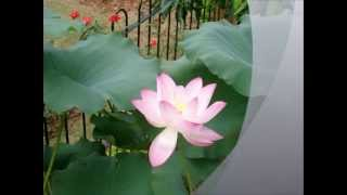 You Don't Know Me by Patti Page (HD)