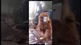 Funny Clip | Funny Video | Funny Maza | Funny Animals