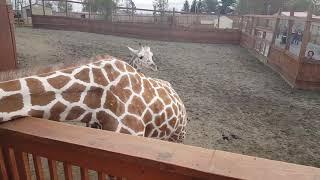 April, Oliver, and Baby Tajiri: Animal Adventure Park
