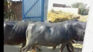 Toota wala khoo by Lally burm