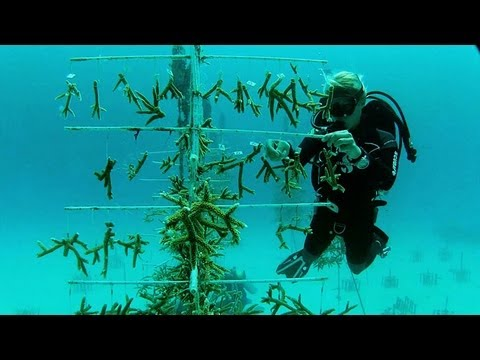 Discovering the Keys to Coral Restoration
