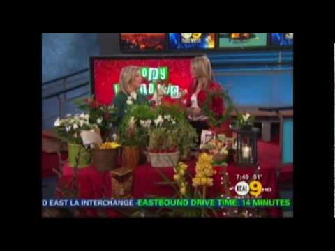 Armstrong Garden Centers - Holiday Decor with Live Plants KCAL 9 Los Angeles