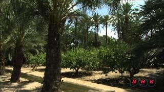 エルチェの椰子園