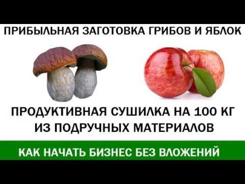 Бизнес на заготовке Грибов и Яблок  Как перерабатывать до 100 кг в день