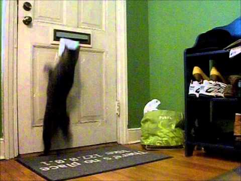 Cat gets mail